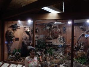 Animals in the Redwoods