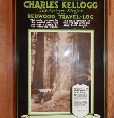 Travel Log, Giant Redwoods