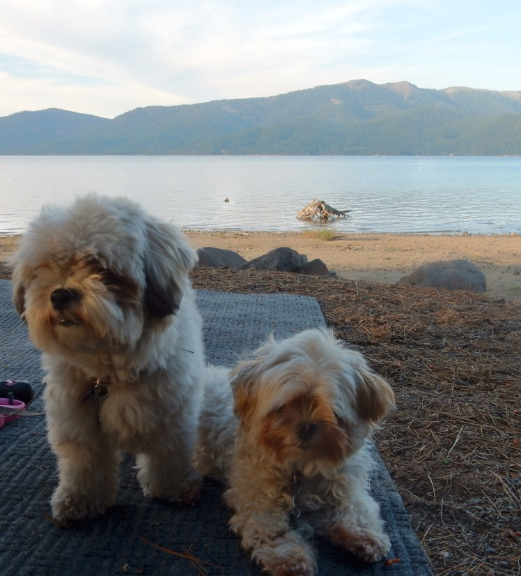 Pups at Lake Almanor