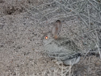 Our daily visitor (I think this was the bunnies campsite)