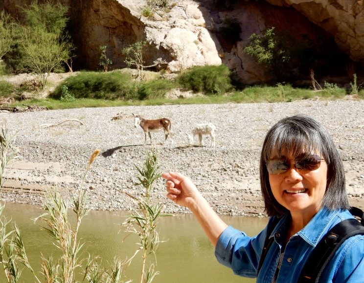 Wild burros on the Mexico side of the Rio Grande