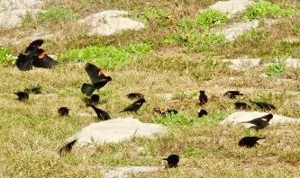 Birds at Malaquite campsite