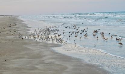 Padre Island seashore