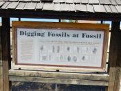 Digging for Fossils, Wheeler High School, Oregon