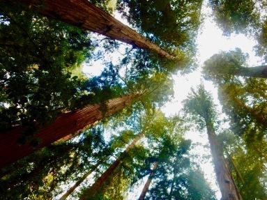 Big Hendy Grove Trail