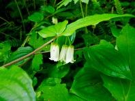 Plantlife, Cape Perpertua, Oregon