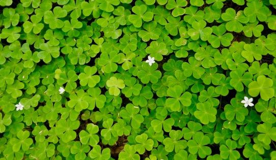 Plantlife, Cape Perpetua Scenic Area